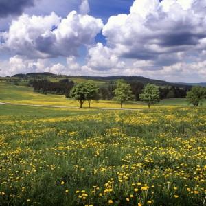 Jarní Žďárské vrchy
