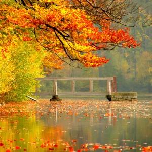 Geopark Vysočina: rybník Velký Pařezák